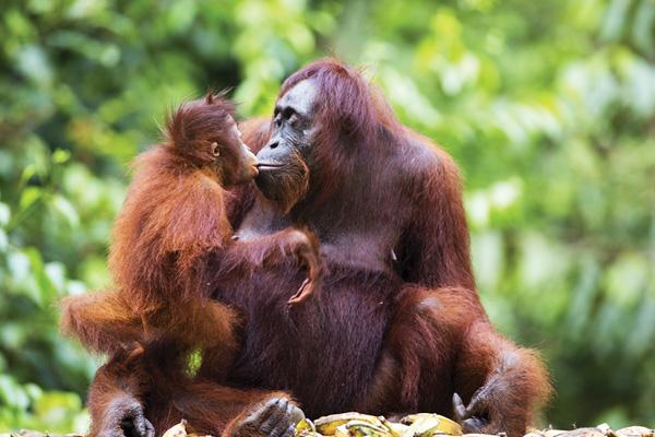 Borneo-2